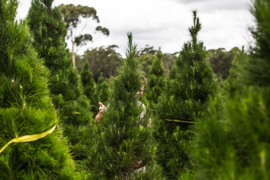 Christmas Tree Farm-2.jpg