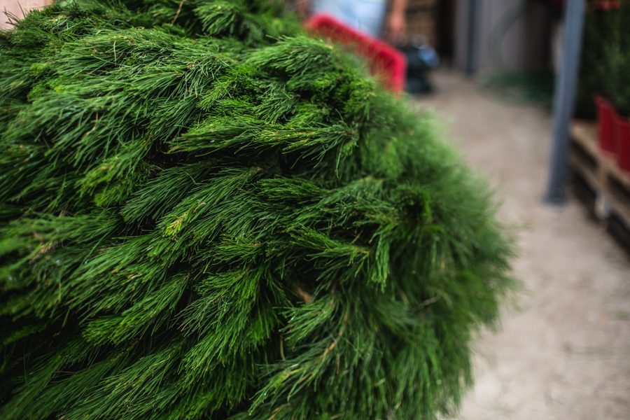 Christmas Tree Farm-5.jpg