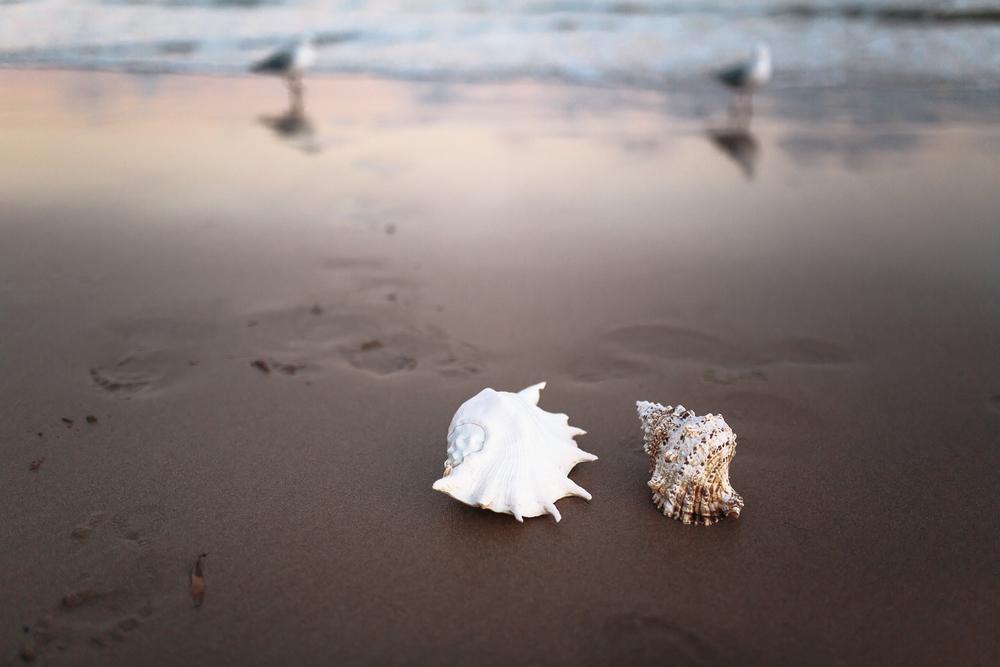 Endless Summer   Sophie Thompson Photography-419.jpg