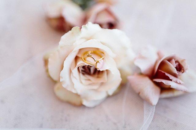Beautiful @kerryrocksjewellery sitting pretty in the prettiest of roses 😻💘