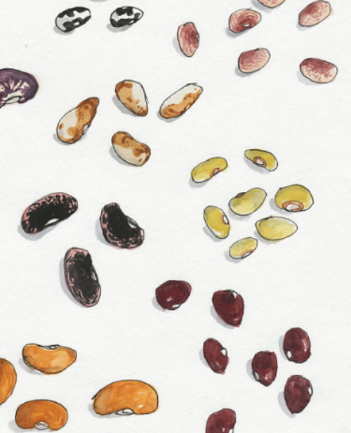 Heirloom Beans by  Wendy MacNaughton