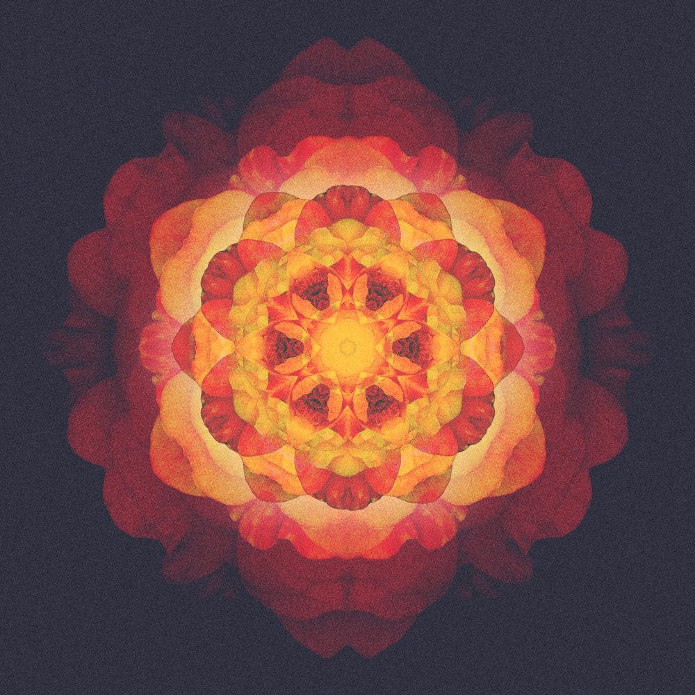 Six roses. 20140212