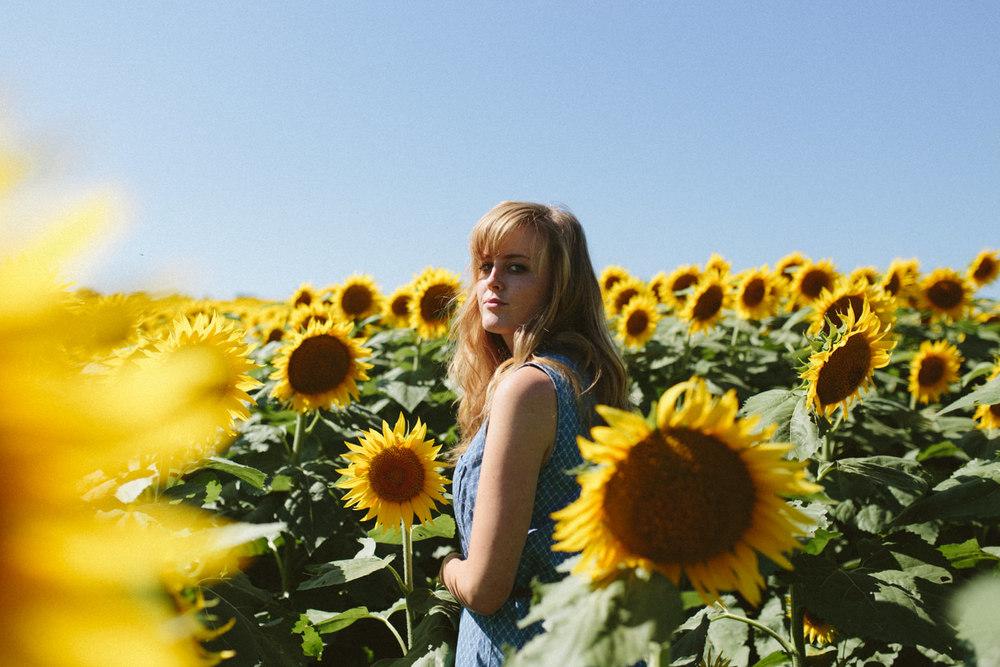 Sunflower Field Grinter's Farm in Lawrence KS-6.JPG