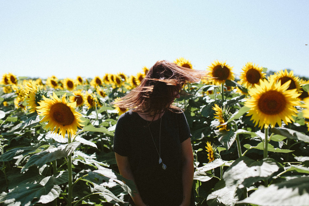 Sunflower Field Grinter's Farm in Lawrence KS-10.JPG