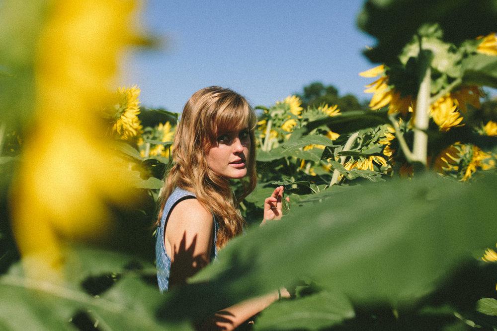 Sunflower Field Grinter's Farm in Lawrence KS-12.JPG