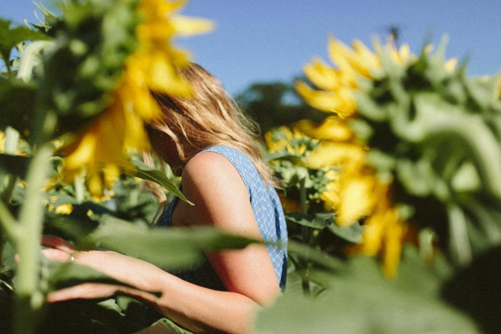 Sunflower Field Grinter's Farm in Lawrence KS-13.JPG