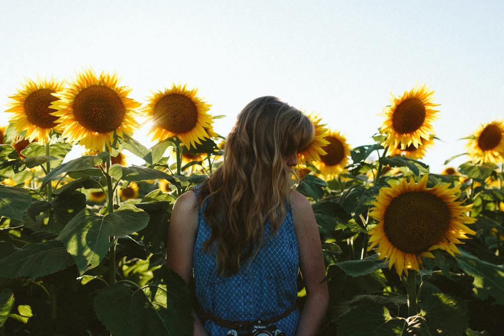 Sunflower Field Grinter's Farm in Lawrence KS-18.JPG