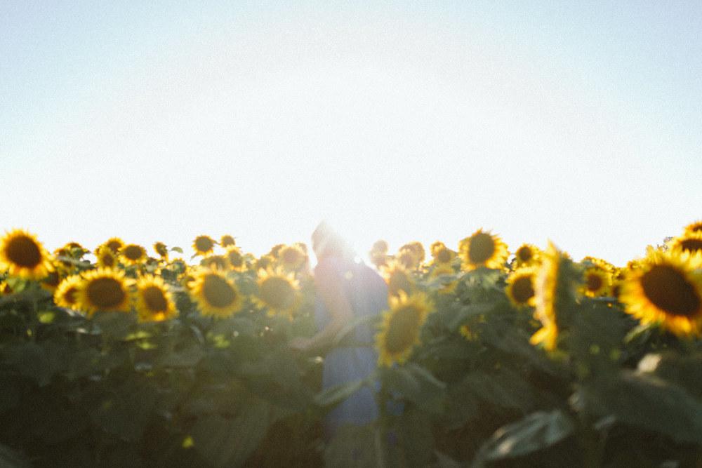 Sunflower Field Grinter's Farm in Lawrence KS-19.JPG
