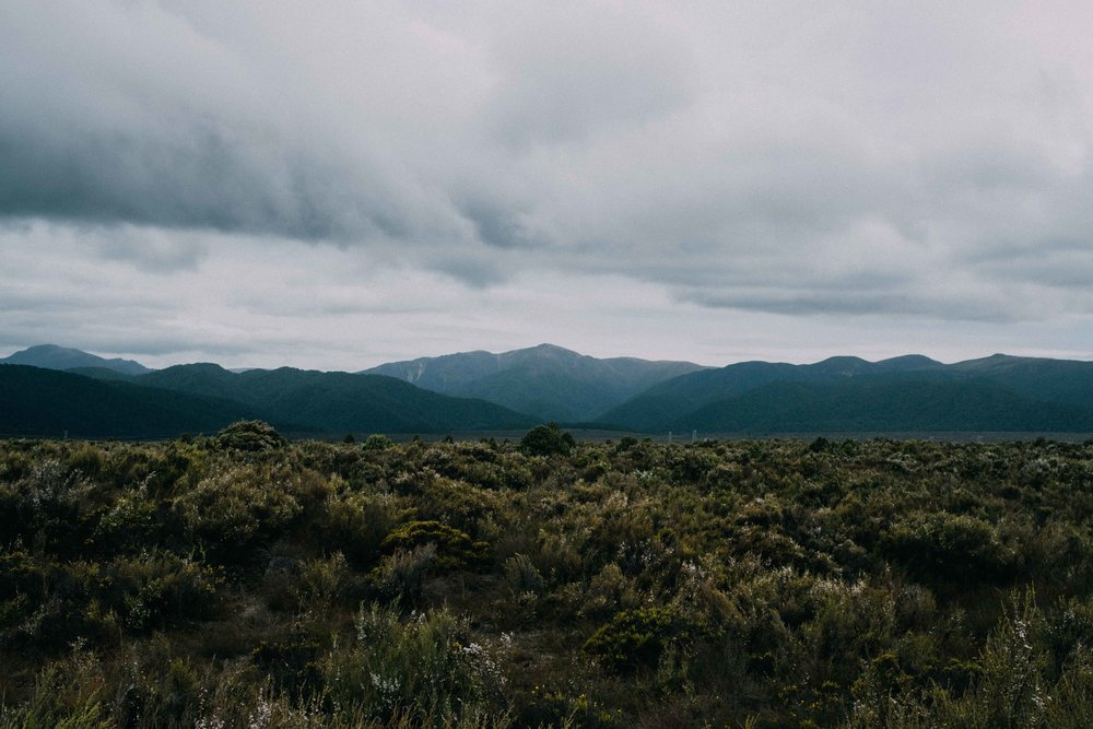 New Zealand small-7.jpg