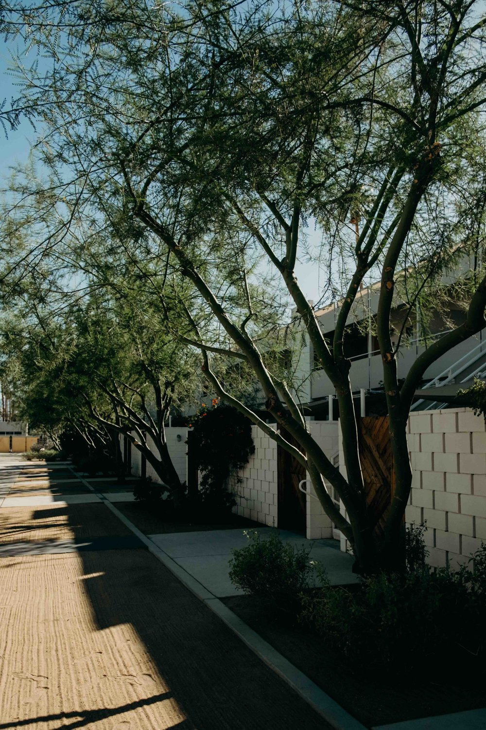 20171004_Palm Springs Travel Guide_15.jpg