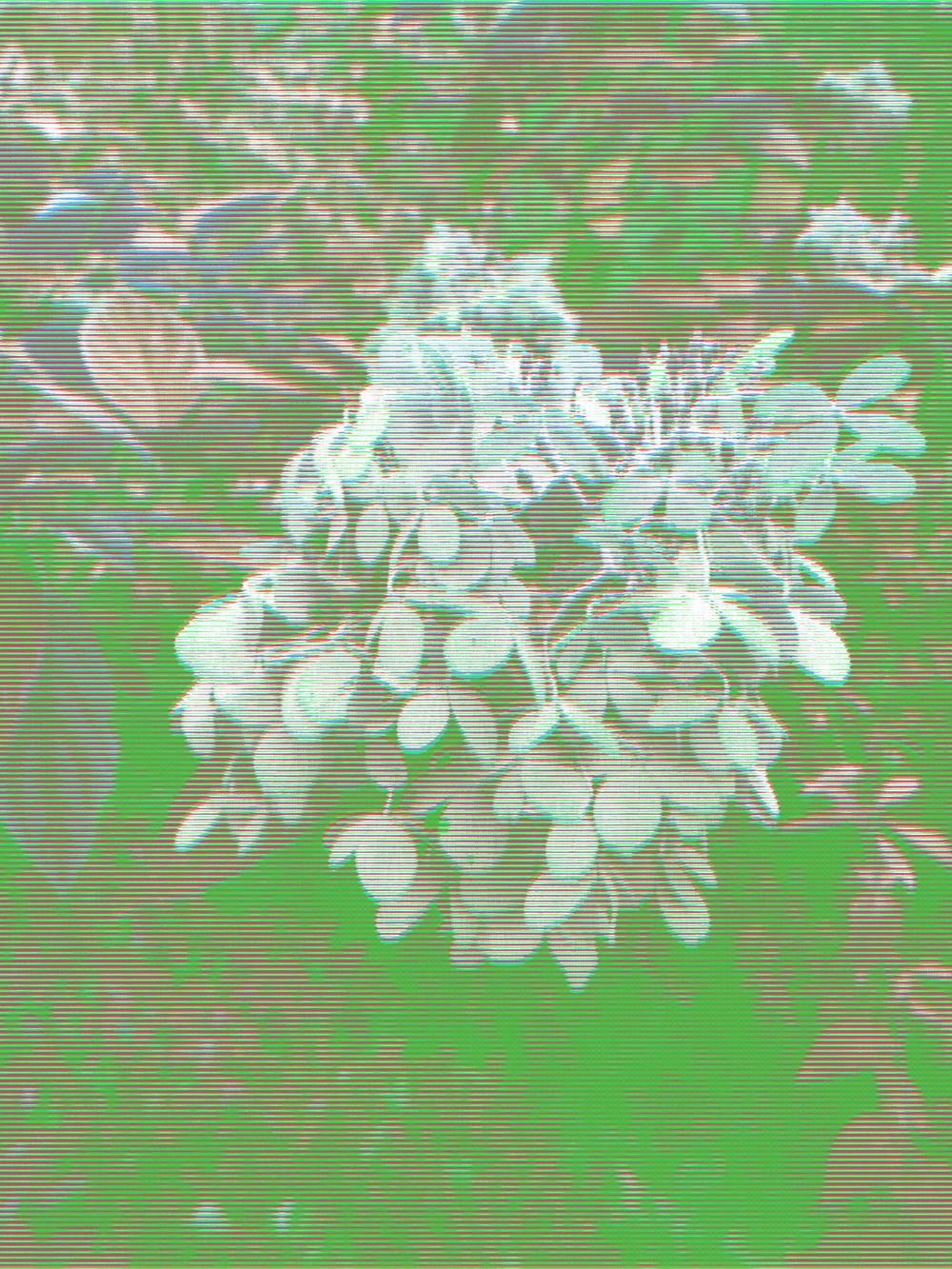 rgb-hydrangea-MOCK1.jpg