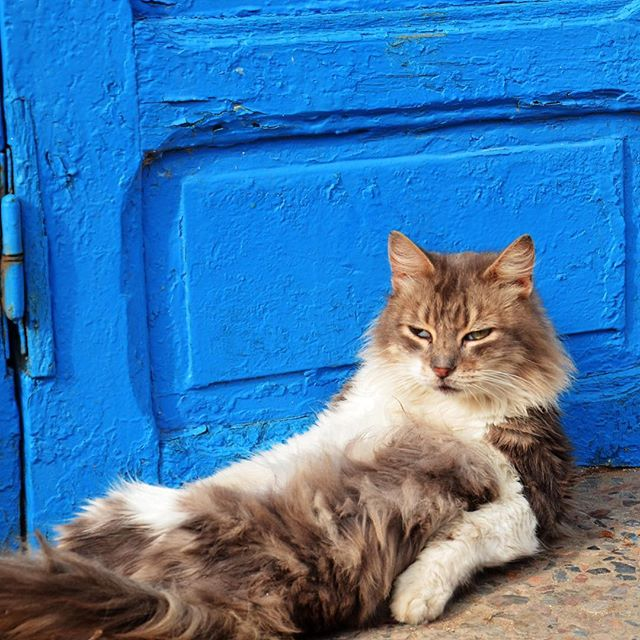 Friday mood. #TGIF . Came across this photo from the travel archives. This kitty was just one of many stray cats roaming around the Kasbah des Oudayas in Rabat, Morocco. . #Morocco #Rabat #KasbahDesOudayas #catsofinstagram #cat #mood #travelfueledbycuriosity #travel