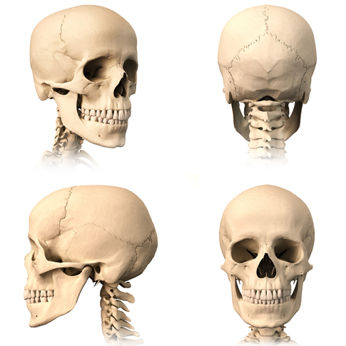 Temporomandibular 2.jpg