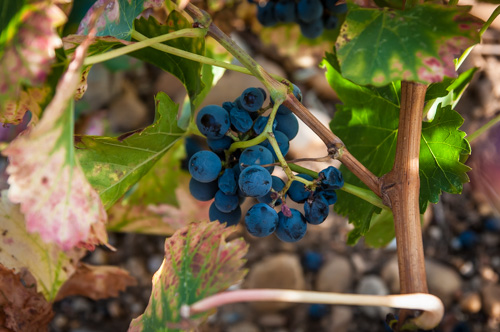 Fall Photo & Wine Tour