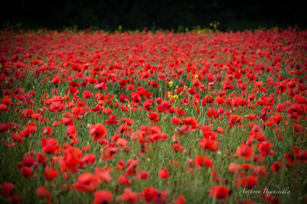 ProvenceForBlissTravelsByAnthonyBianciella-5.jpg