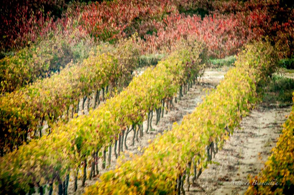 ProvenceForBlissTravelsByAnthonyBianciella-9.jpg