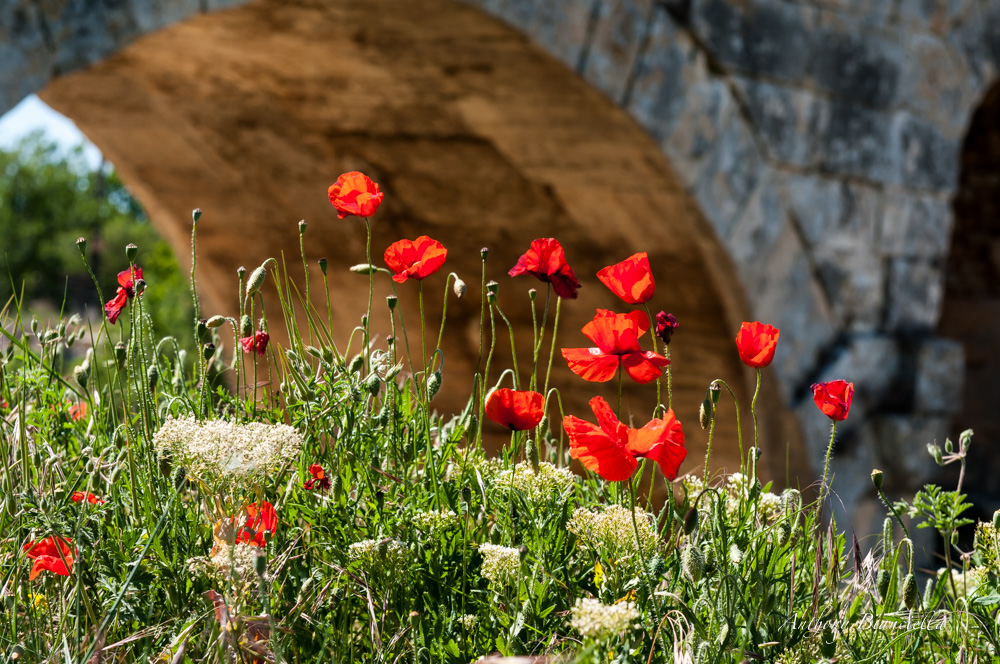 ProvenceForBlissTravelsByAnthonyBianciella-15.jpg