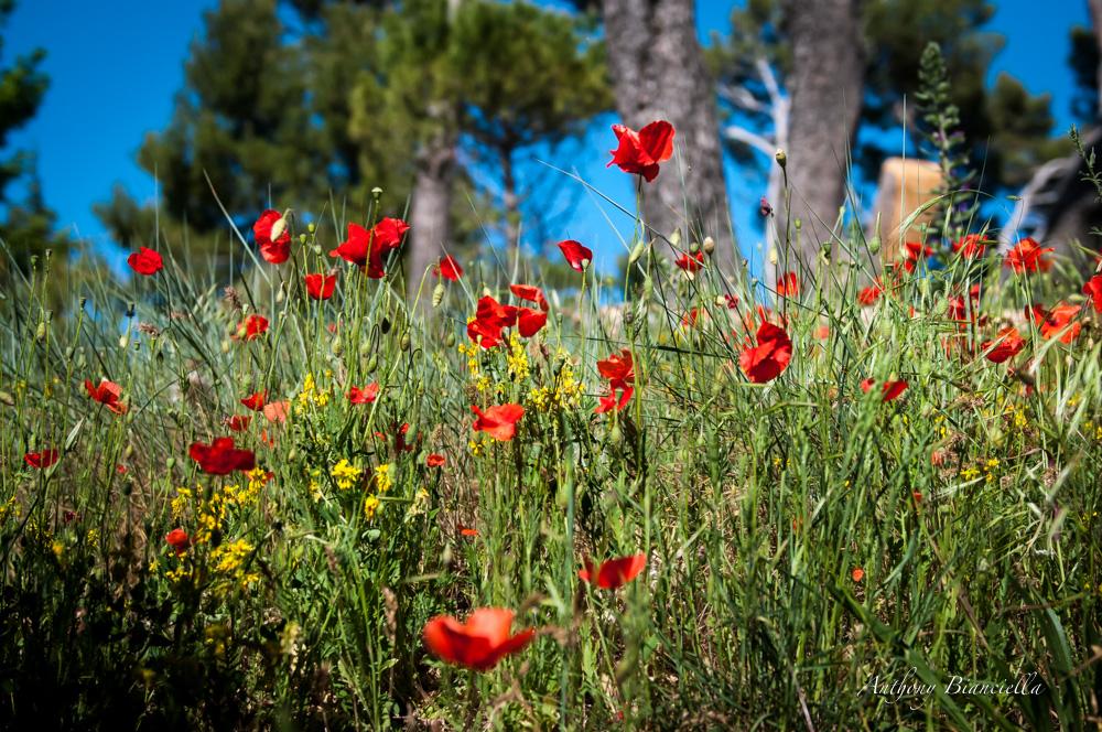 ProvenceForBlissTravelsByAnthonyBianciella-16.jpg