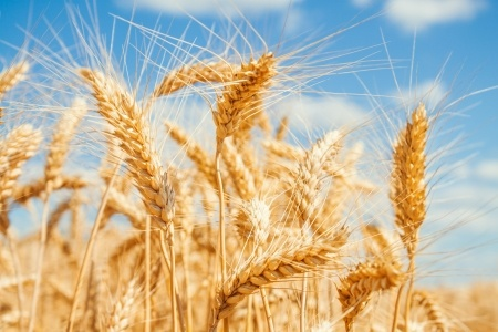 Wheat Allergy Symptoms