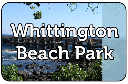 Whittington.png