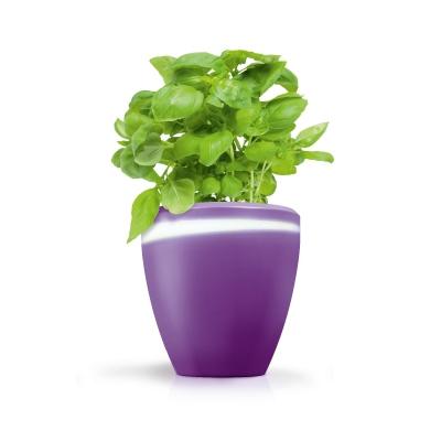 Funky-_Garden_pots.jpg