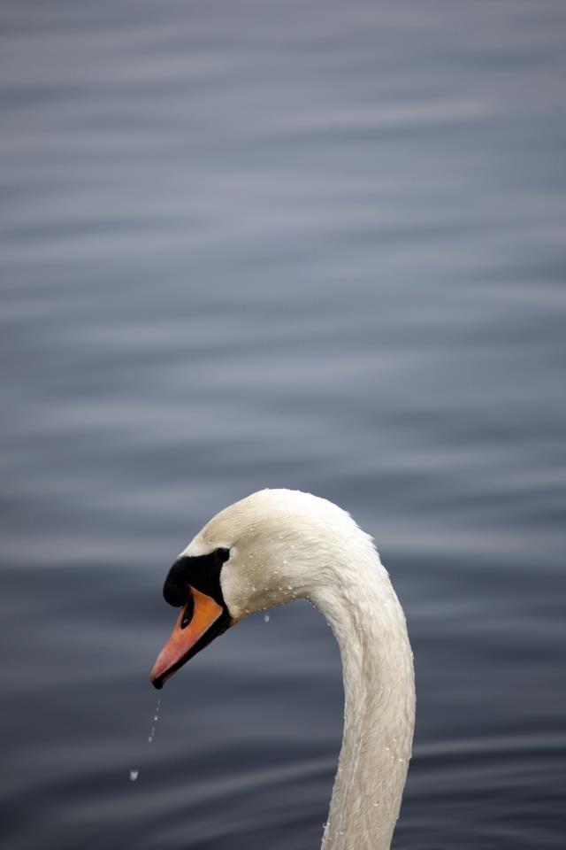#swan #salfordquays