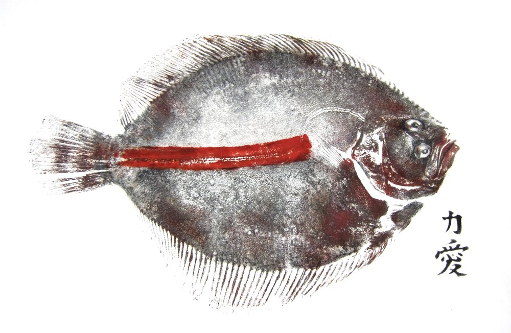 Red Brill