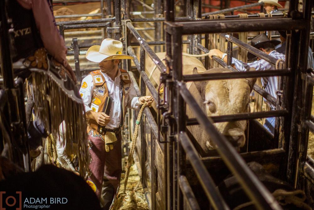 bull_rider_12.JPG