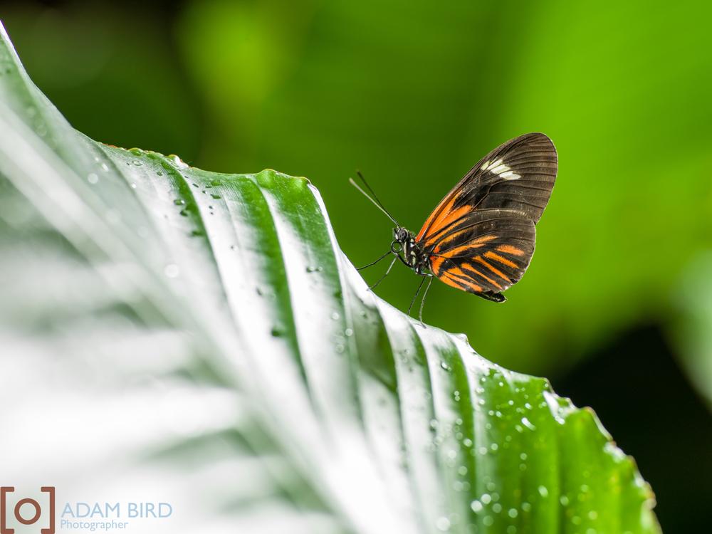 frederik_meijer_butterflies012.JPG