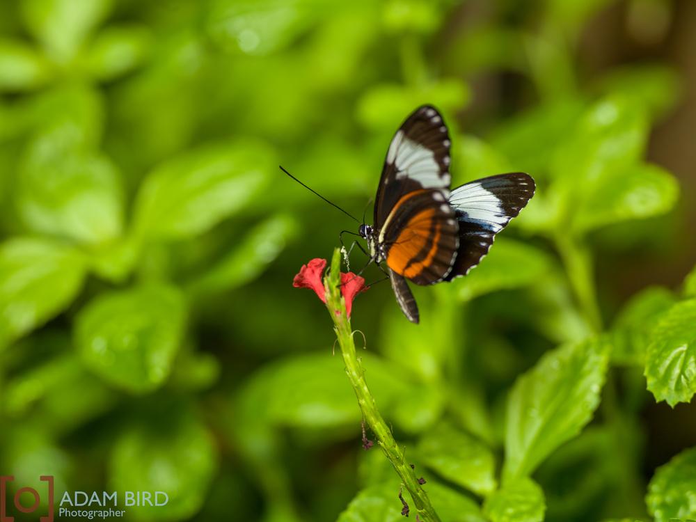 frederik_meijer_butterflies013.JPG