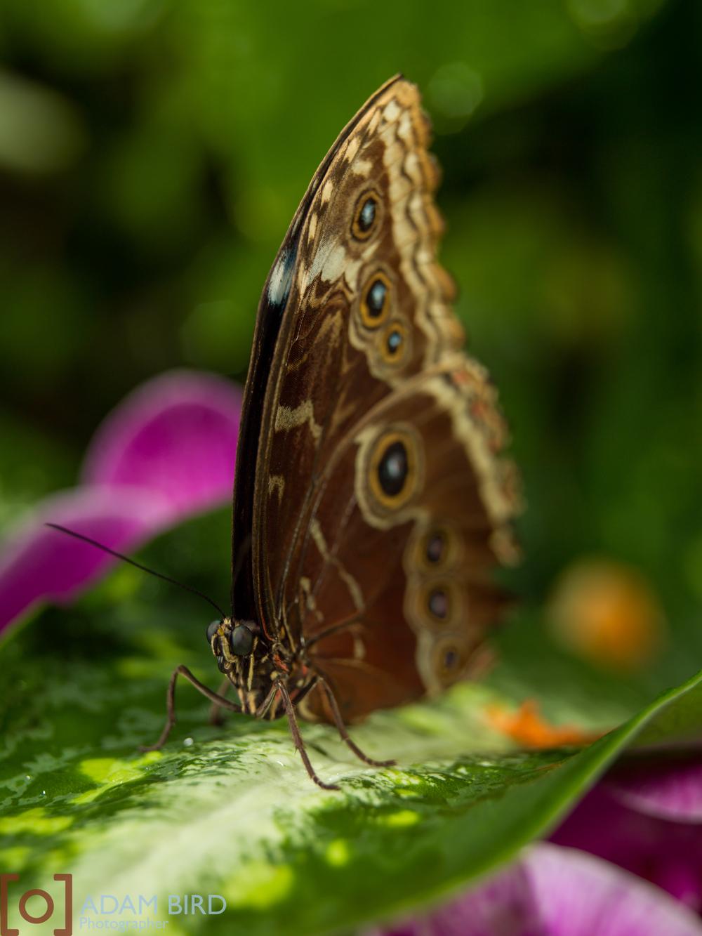 frederik_meijer_butterflies015.JPG