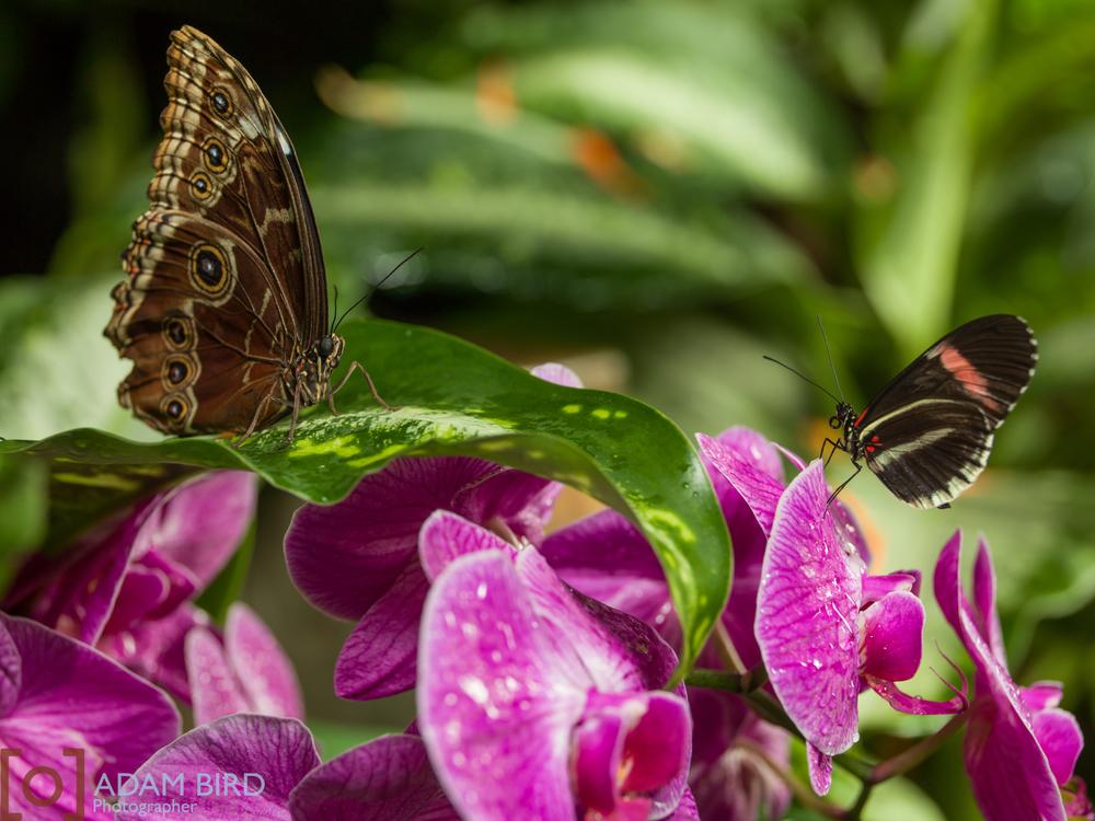 frederik_meijer_butterflies016.JPG