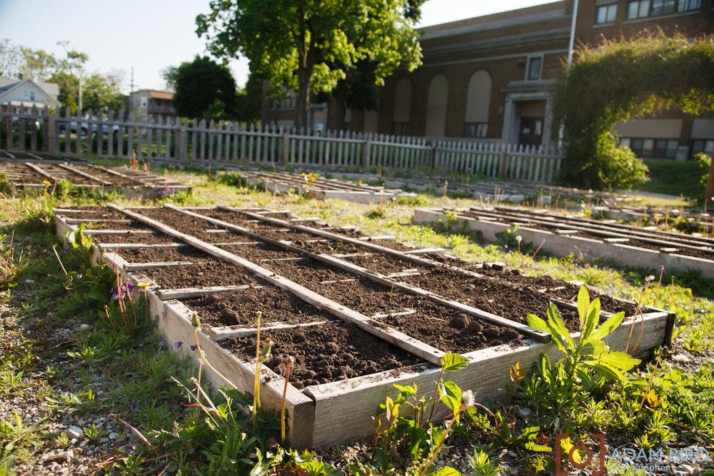 school_garden160.JPG