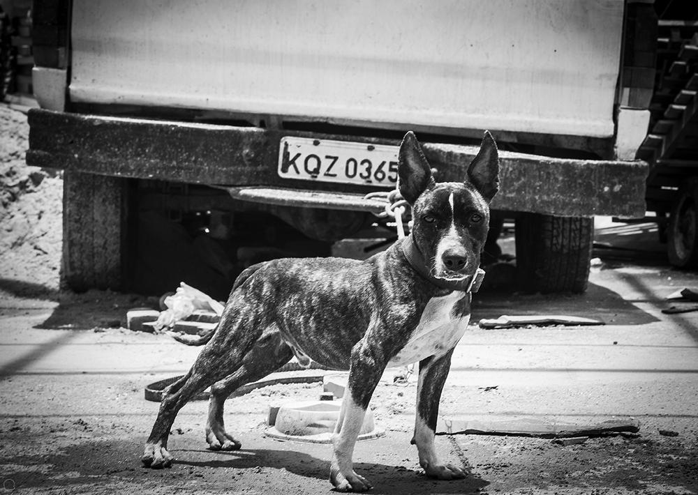 premof9 cão 8929.png