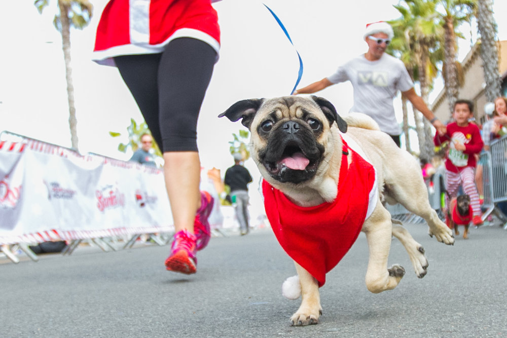 SantaRun-Dogs-Run_0070.jpg