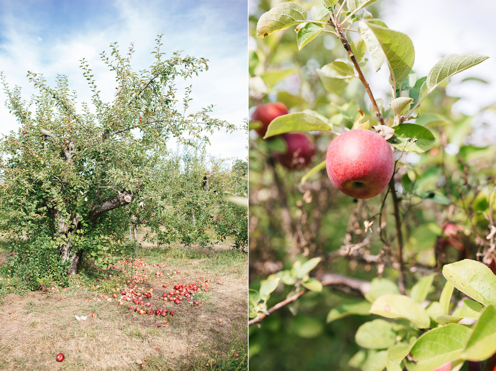 brooklyn-family-photographer_apple-picking-1.jpg