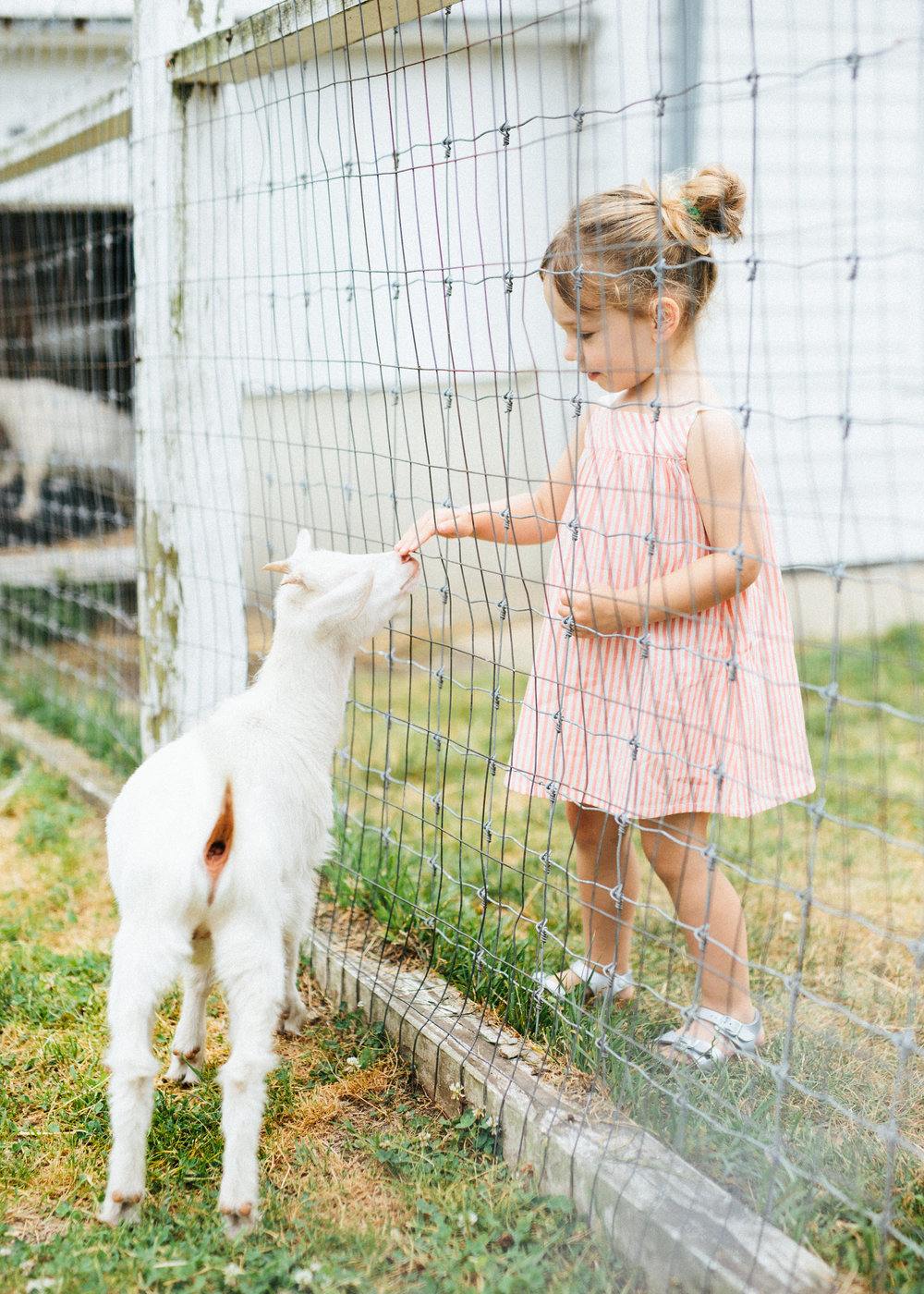 cami_muscoot-farm_westchester_new-york_child-photographer-15.jpg