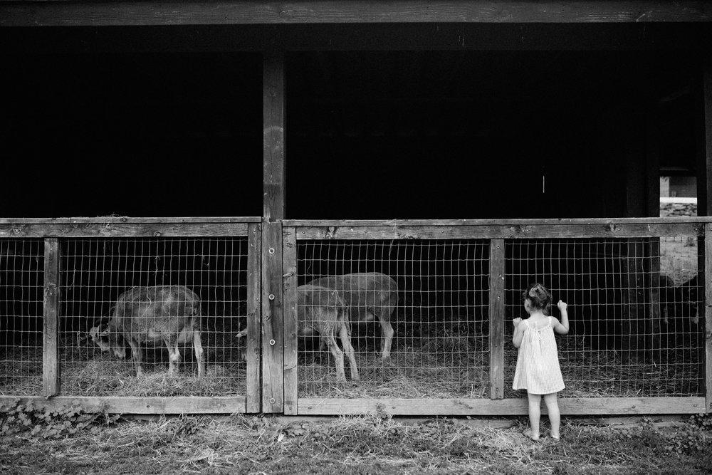 cami_muscoot-farm_westchester_new-york_child-photographer-18.jpg