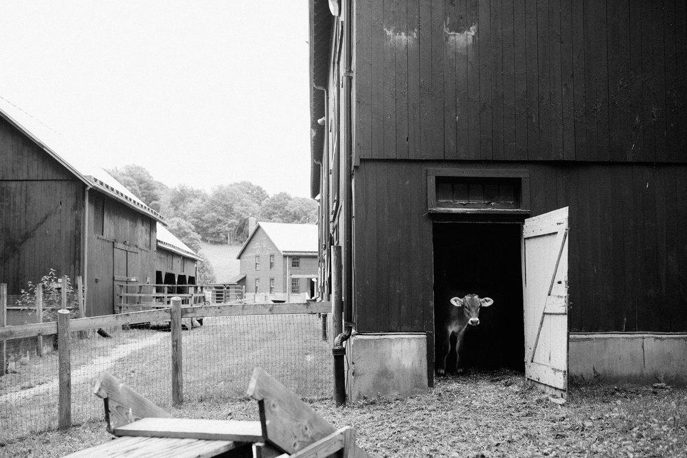 cami_muscoot-farm_westchester_new-york_child-photographer-28.jpg
