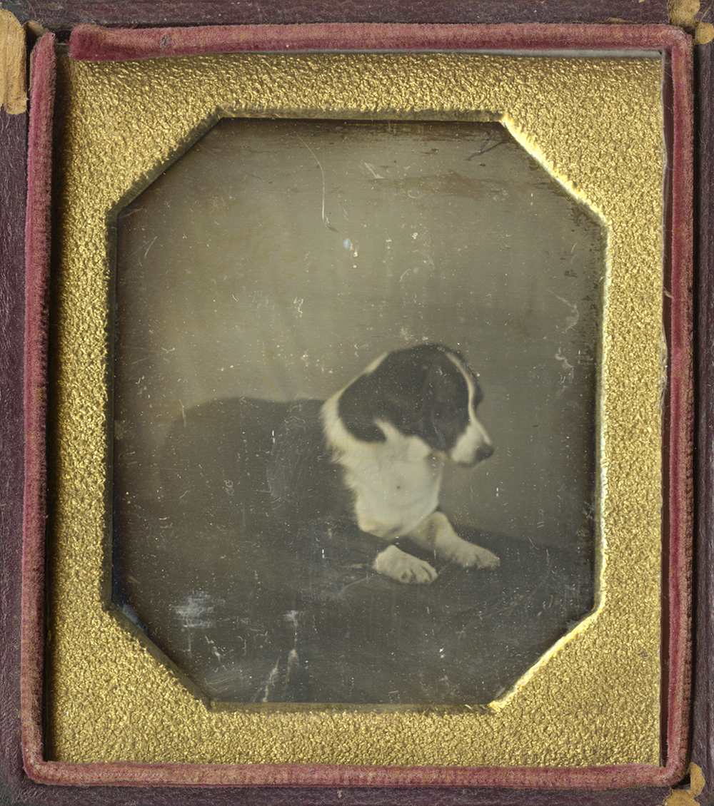 Portrait of a Dog (probably a Corgy) Seated on the Floor