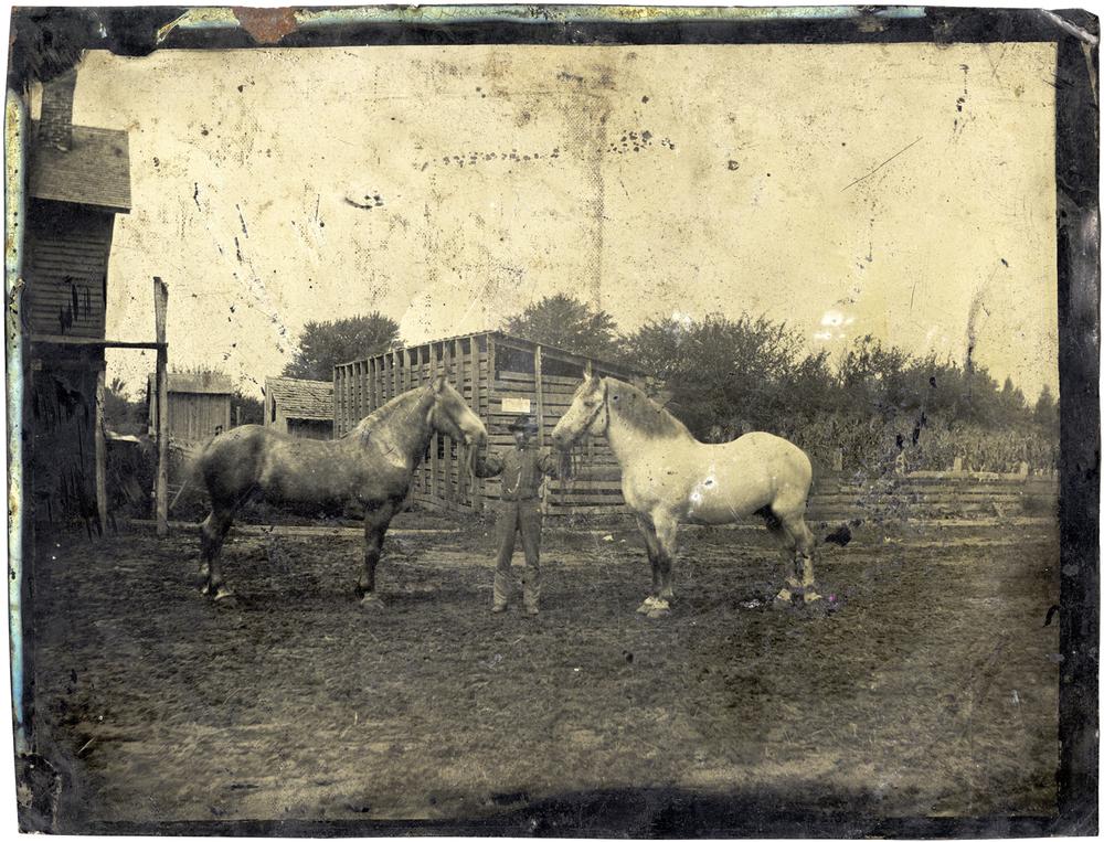 Two Horses, 2014 - LR12522