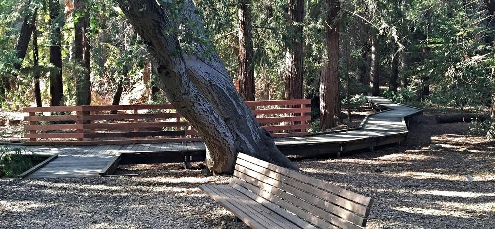 Redwood Grove, City of Los Altos