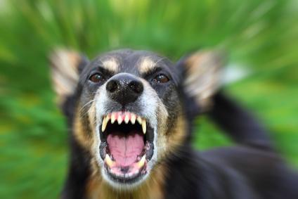chien en colère.jpg