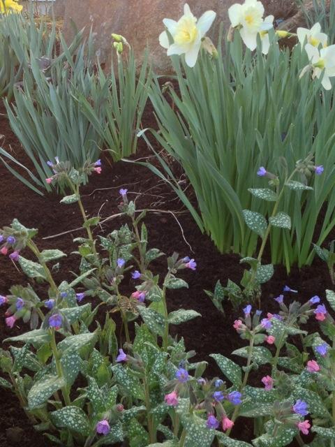 daffodil medley.jpg