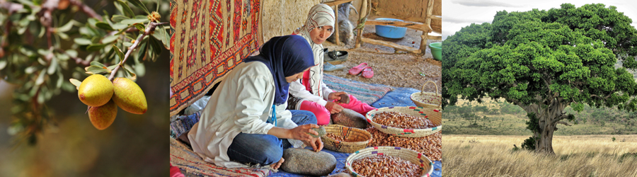 "Our organic Argan Oil comes from the ""Tree of Life,"" as it's known in Morrocco, where local women pick and prepare the Argan nuts to be developed into the oil."