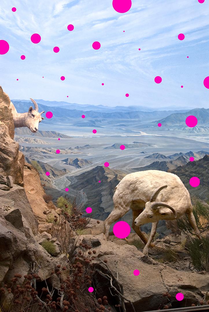 Pink Placebo
