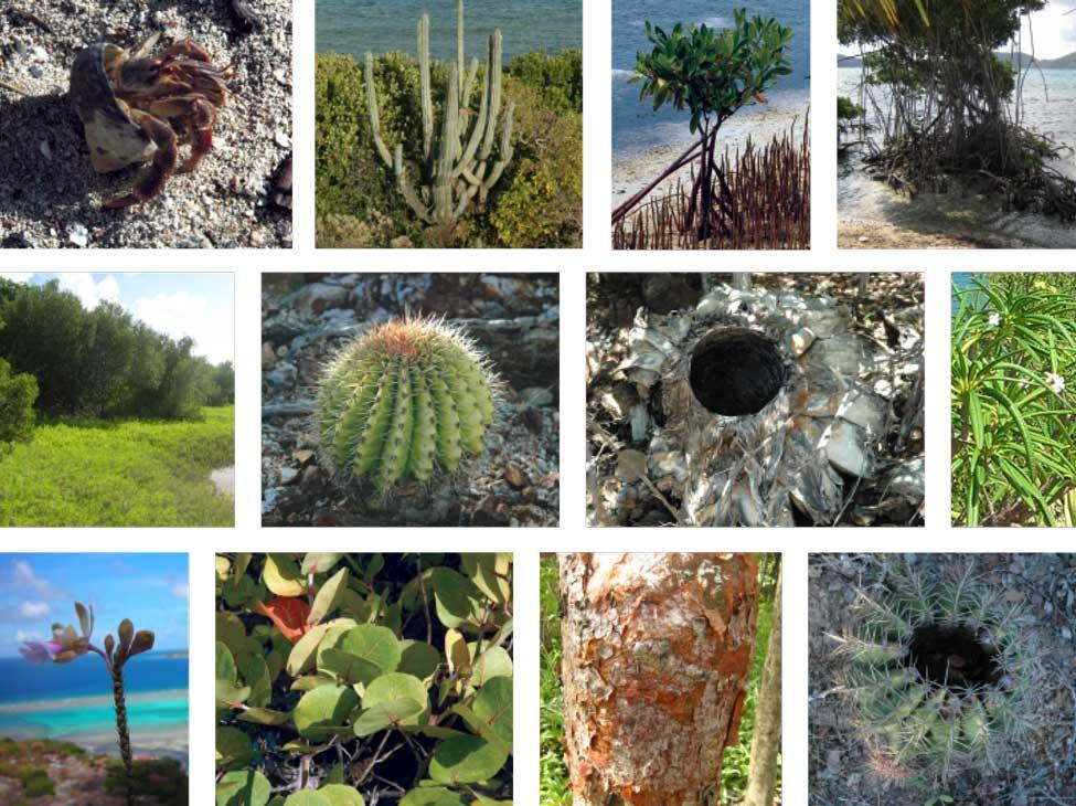 MIM-Vegetation.jpg