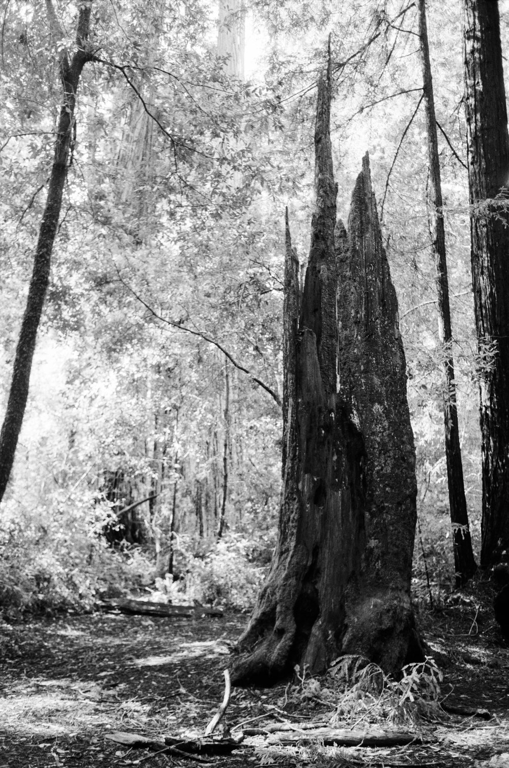 Big Basin - Rebel2000 20-35 - HP5 - 1 of 1.jpg