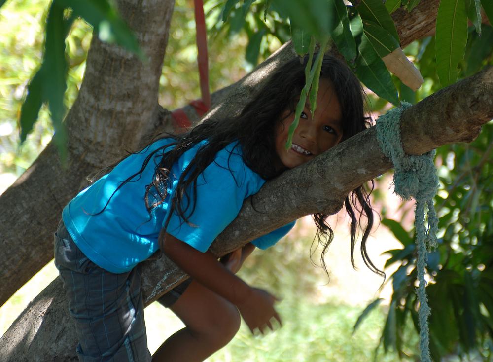 j in tree.jpg