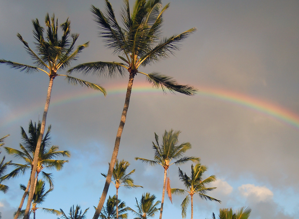 rainbow and palm trees.jpg